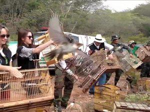 Imagens dos agentes e técnicos abrindo gaiolas foram compartilhadas milhões de vezes. Foto: BBC