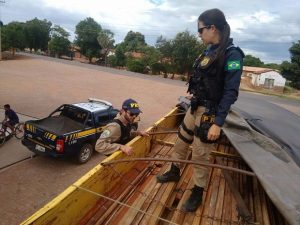 Carga de madeira ilegal apreendida. Foto: Divulgação/PRF