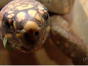Maioria dos animais levado ao Ceretas é vítima de maus-tratos ou atropelamento. Foto: Reprodução/TV TEM
