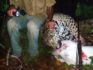 Polícia Federal divulgou imagens dos animais mortos pelo suspeito. Foto: Divulgação/Polícia Federal de MT