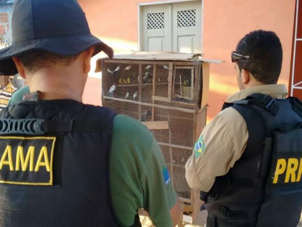 Operação Azul Cobalto resgatou 870 animais entre os dias 21 e 29 de abril, no norte da Bahia (Foto: Divulgação / PRF)