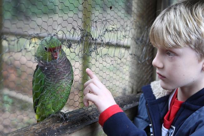 Estudantes participaram da soltura de aves ontem e se encantaram com os papagaios