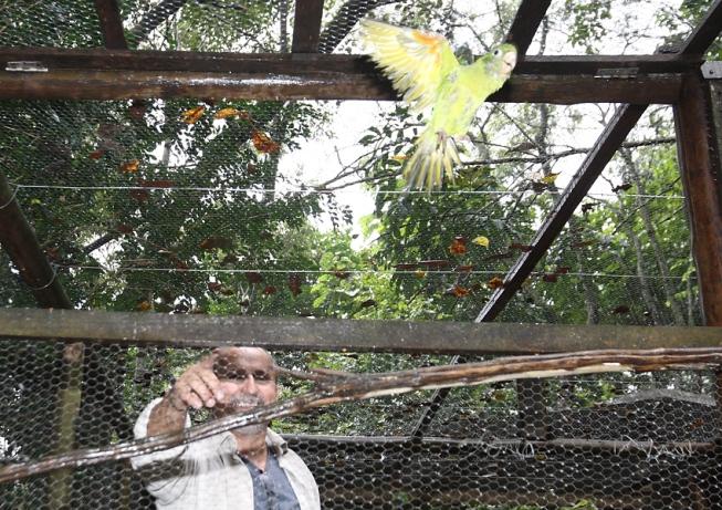 Dezenas de pássaros apreendidos após operações contra o tráfico de animais foram soltos ontem em Brumadinho