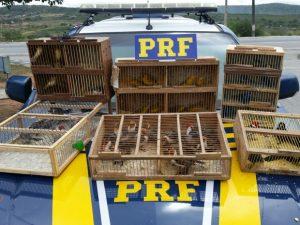 Pássaros foram apreendidos em São Caetano, na zona do agreste. Foto: Divulgação/PRF