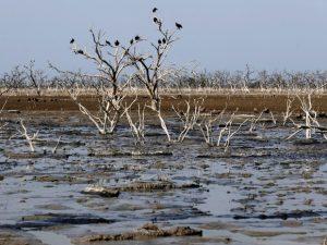 Corvos são vistos em ramos de árvores entre lama do rio. É a pior seca em quase duas décadas. Foto: Jorge Adorno/Reuters