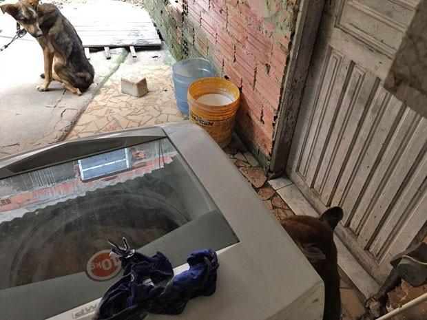 Onça estava ao lado de uma máquina de lavar. Cachorro observa. (Foto: Divulgação/Bombeiros)