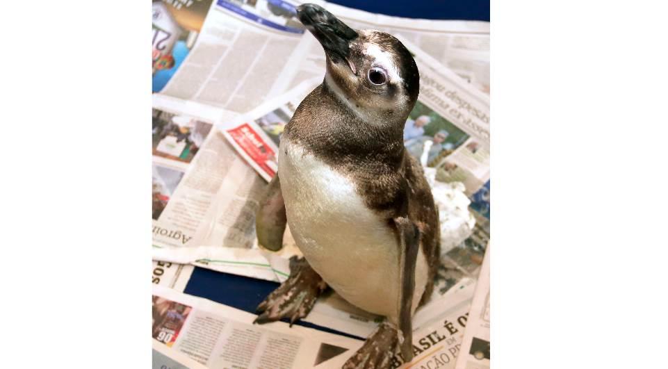 pinguim-lg-b8a08840