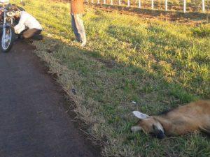 Policial pilotava moto e atropelou lobo-guará. Foto: Osvaldo Nóbrega/ TV Morena