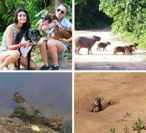 Cachorros, capivaras, jacarés e corujas em locais de competição da Olimpíada. Foto: GloboEsporte.com