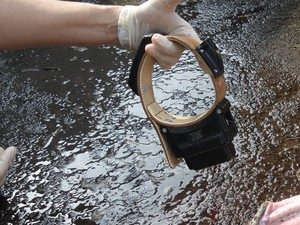 Onças são monitoradas com colar. Foto: Luiz Pires / Arquivo Pessoal