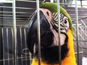 IAP autoriza adoção provisório de animais silvestre apreendidos e resgatados no PR. Foto: Divulgação/IAP