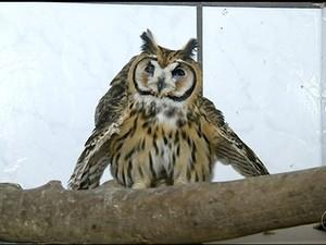 Centro recebe cerca de 40 animais por mês (Foto: Reprodução/TV Anhanguera)
