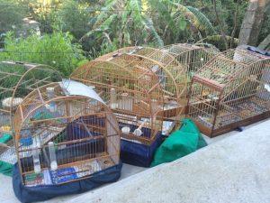 Aves eram mantidas em baixas condições de preservação. Foto: Divulgação/Polícia Federal