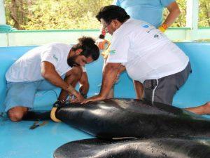 Animais foram devolvidos à natureza em fevereiro deste ano. Foto: Inpa/Divulgação