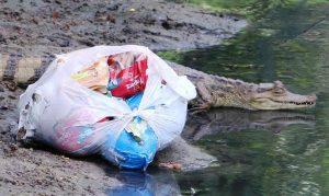 Pesquisador explica que animais sentem cheiro de lixo e comem qualquer coisa, principalmente o que for mais abundante. Foto: Euzivaldo Queiroz