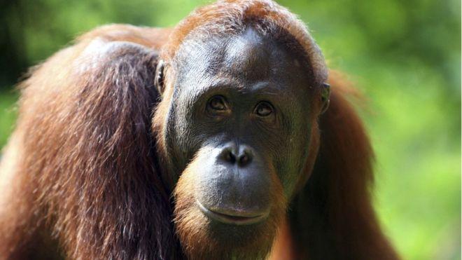 Nova base de dados sugere que 1.800 macacos foram apreendidos em dez anos.
