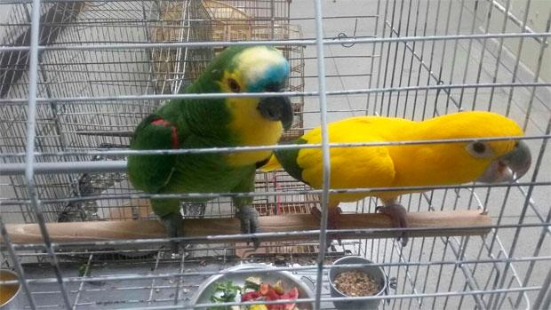 Entre as espécies resgatadas estão aves ameaçadas de extinção.