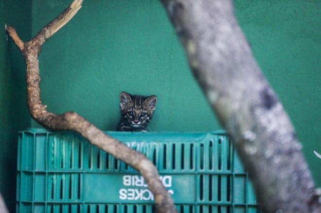 Foto: Diorgenes Pandini / Agencia RBS.