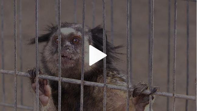 Centro de Triagem faz trabalho de reabilitação para devolver animais para a natureza.