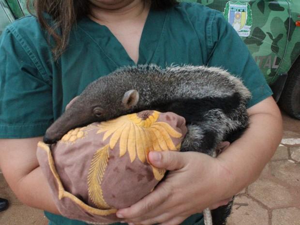 Campanha também quer lençóis, mamadeiras e toalhas para os filhotes (Foto: Divulgação/Naturatins)