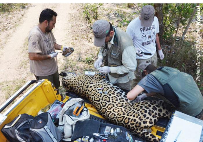 Joares May participa do projeto há cinco anos, enquanto se dedica a outras ações de preservação ambiental