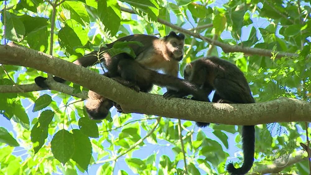 Campinas confirma morte de 3 macacos por febre amarela (Foto: Reprodução/EPTV)