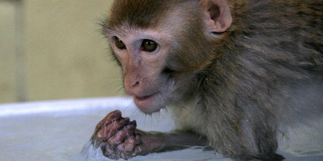 Macaco filhote em zoológico