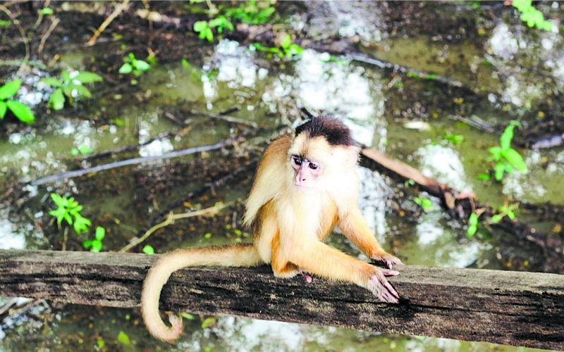Passeios ao Janauari promovem o contato entre animais e humanos (Foto: Reprodução)