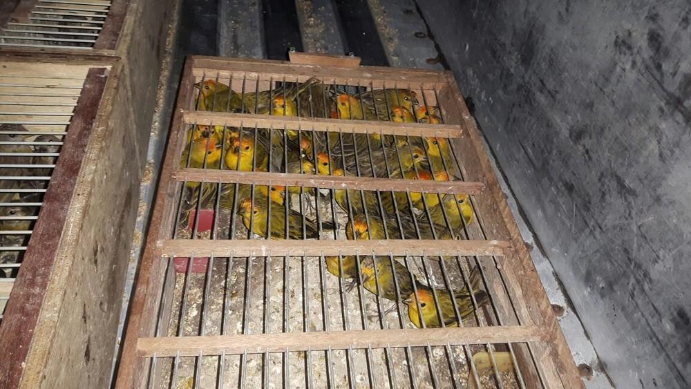 Aves seriam comercializadas na Feira de Caruaru (Foto: Divulgação/Cipoma)