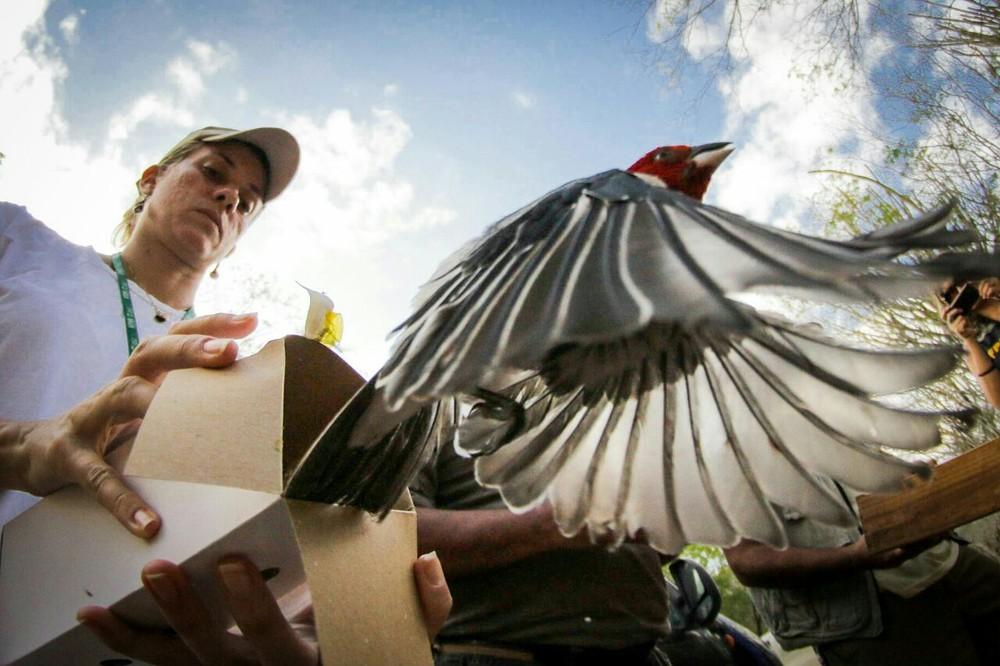 Pássaros de várias espécies típicas da Caatinga (Foto: Jonathan Lins/MP-AL)