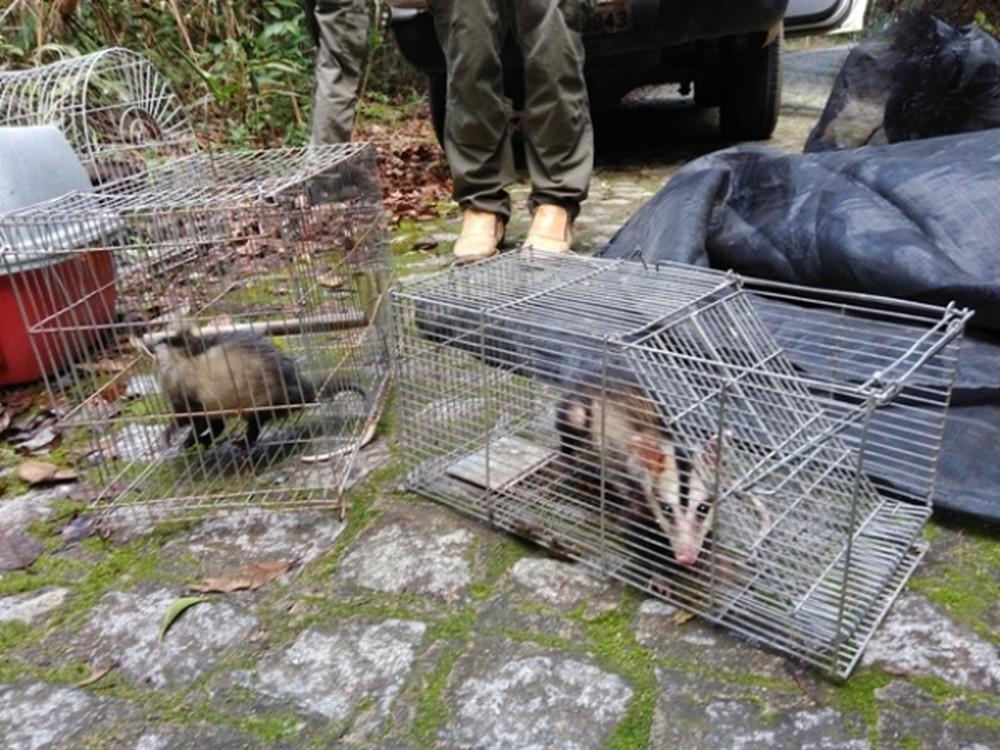 Cassacos também foram devolvidos à natureza (Foto: Wanessa Santos/IMA)