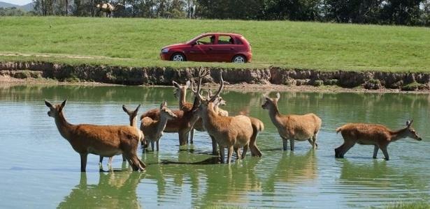Parque do RS iniciou os abates de cervos em razão de um surto de tuberculose.