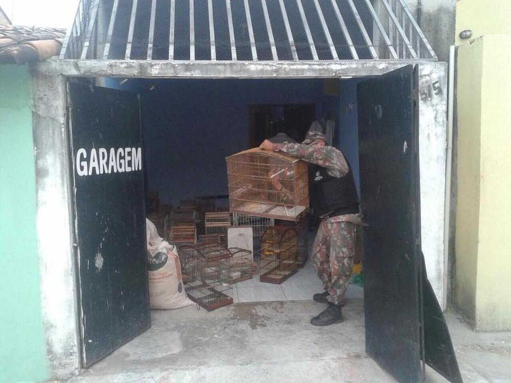 Policiais localizaram os animais dentro da casa do suspeito nesta quarta-feira (27), em Fortaleza. (Foto: BPMA/Divulgação)