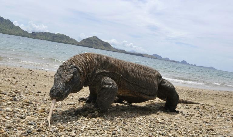 Tanto os maiores quanto os menores animais do mundo enfrentam um maior risco de extinção devido às atividades humanas - AFP/Arquivos