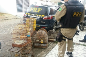 Em uma casa a Equipe Fauna encontrou nove pássaros (Fotos: FPI)