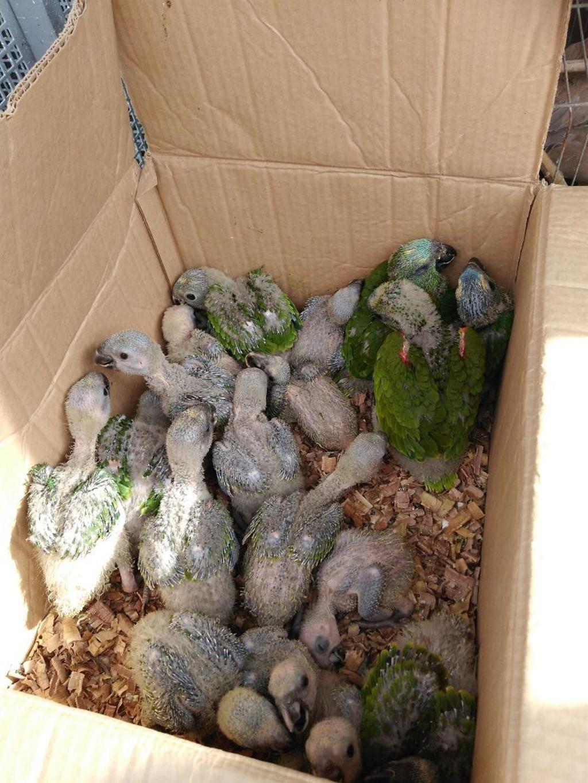 Os animais estavam em uma residência no município de Campo Largo, na região metropolitana de Curitiba