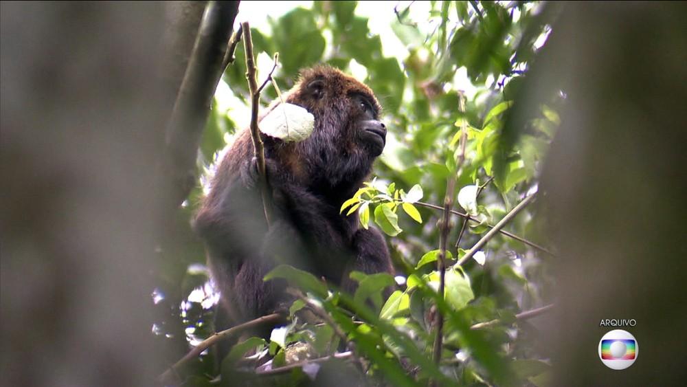 Macaco foi encontrado morto em Horto Florestal (Foto: Reprodução/TV Globo)
