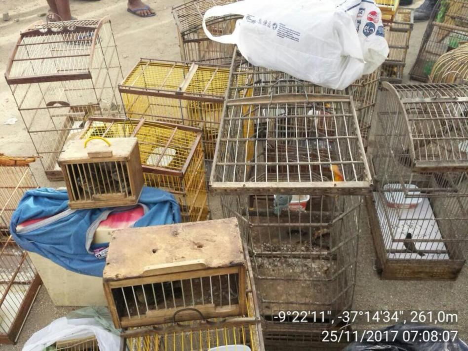 Animais apreendidos no interior foram encaminhados ao Ibama
