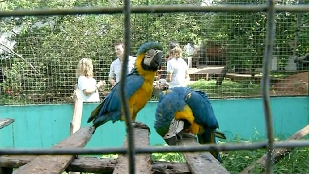 Especialista realiza pesquisa sobre tráfico de animais em Araguaína (Foto: TV Anhanguera/Reprodução)