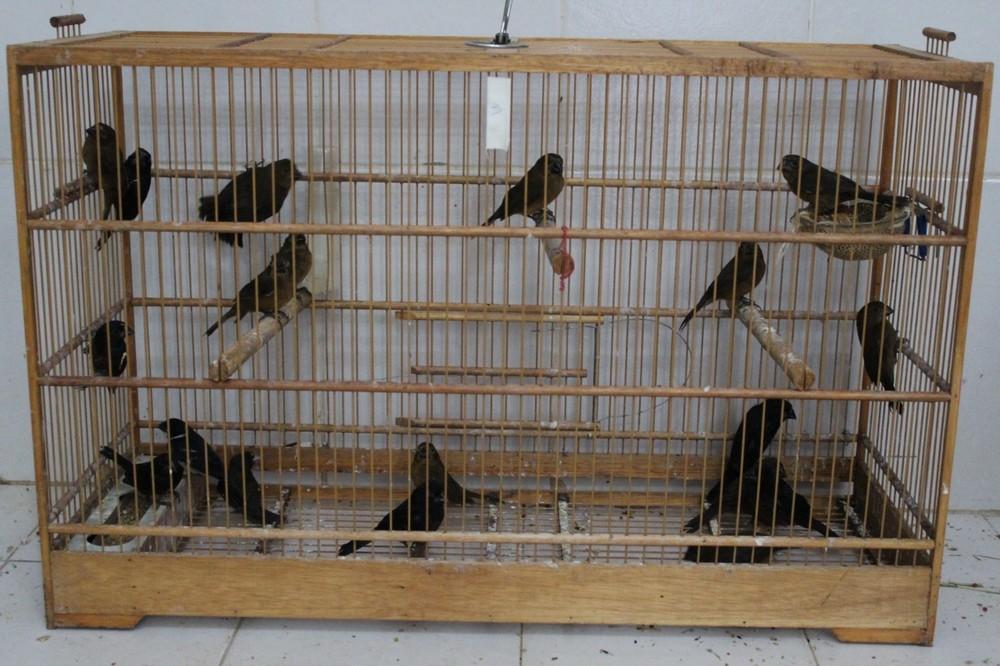 Pássaros foram encontrados em bagageiro de ônibus (Foto: Divulgação/Naturatins)