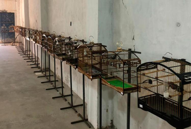 Animais foram encontrados em evento irregular.