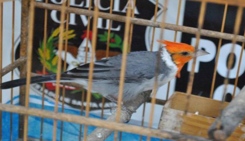 Dentre os animais encontrados está um cardeal(Foto: Polícia Civil, Divulgação)
