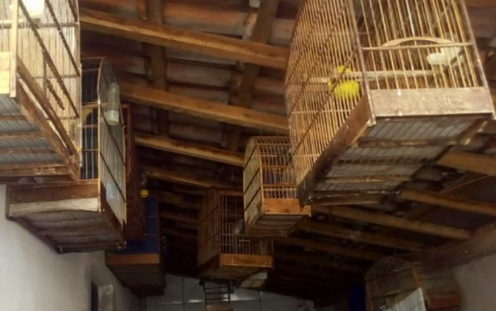 Aves estavam em gaiolas em uma casa no Jardim Chaparral — Foto: Reprodução/EPTV
