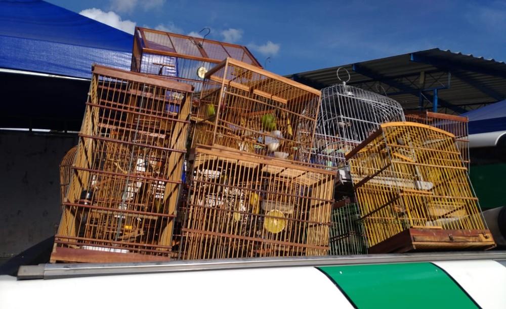 Aves encontradas em feira no Jacintinho estavam aprisionadas em gaiolas — Foto: BPA/Divulgação