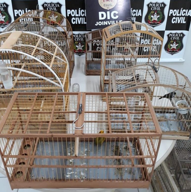 Foram apreendidos sete aves silvestres(Foto: divulgação, Polícia Civil)