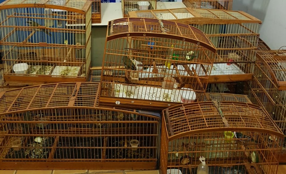 Homem mantinha em casa 14 pássaros silvestres — Foto: Divulgação/Polícia Civil