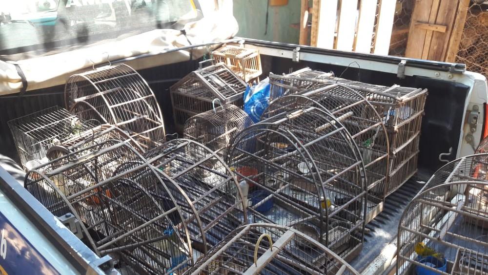 Polícia apreendeu 38 pássaros silvestres — Foto: Polícia Militar/ Divulgação