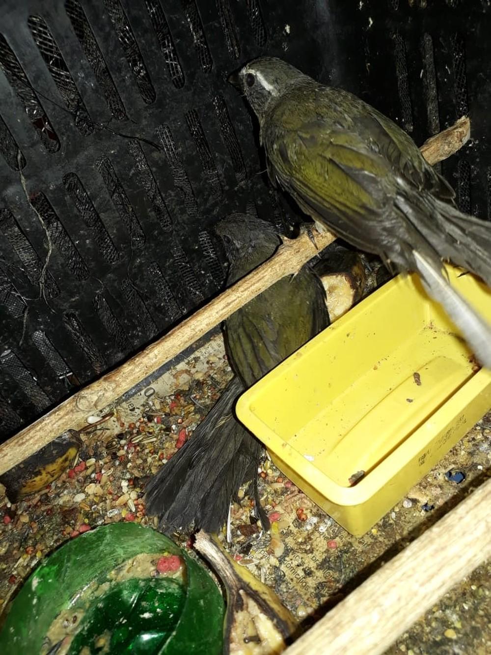 Aves são resgatadas de cativeiro em Silveiras — Foto: Divulgação / Polícia Ambiental