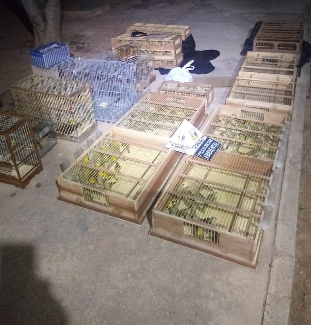 Suspeito confessou que pários seria comercializados no Amazonas — Foto: Divulgação/Cipa