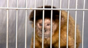 Read more about the article Onde está a fauna brasileira? Panorama do tráfico de animais revela futuro preocupante